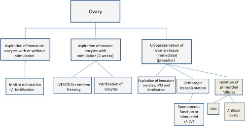 Restoration of ovarian activity and pregnancy after